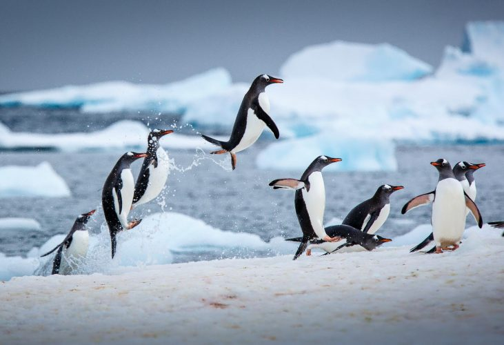 Antarctica - Must Visits Places