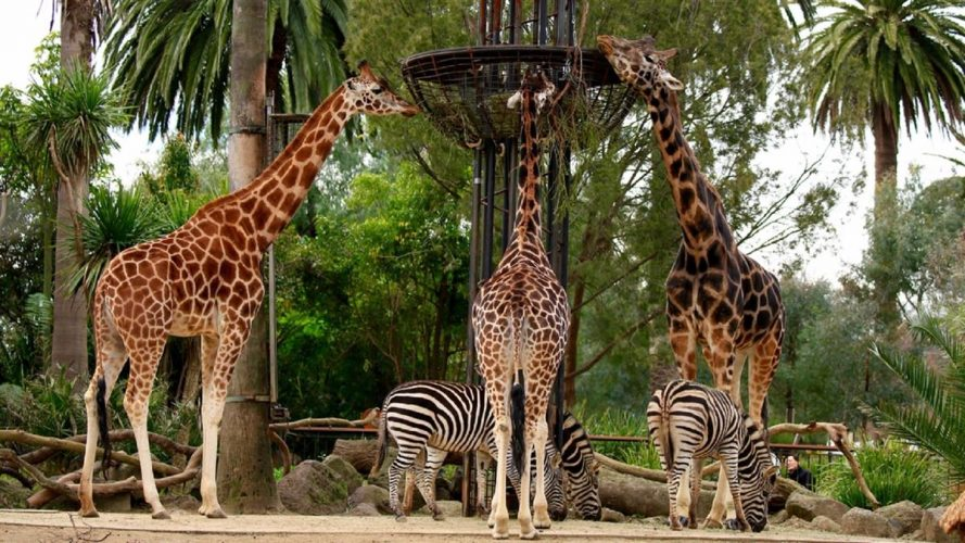 MELBOURNE ZOO - most fascinating zoos