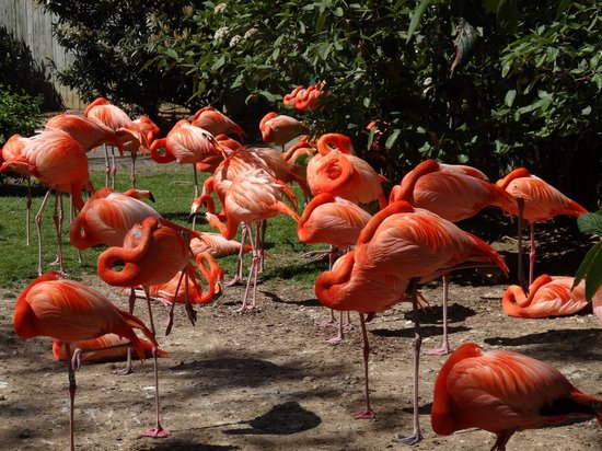 NATIONAL ZOOLOGICAL PARK - most fascinating zoos