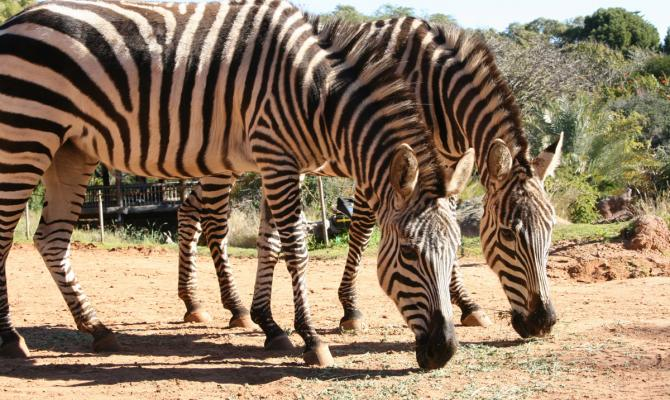 PERTH ZOO - most fascinating zoos