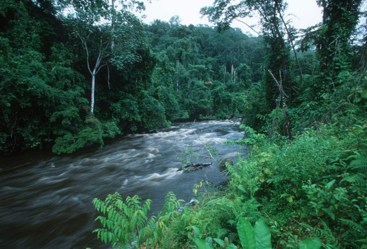 Congo Basin Forest - most beautiful forests