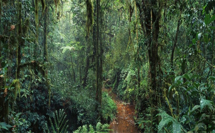 The Congo Rainforest - Biggest Rainforests